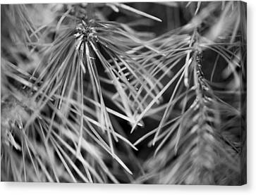 Pine Needle Abstract Canvas Print by Susan Stone