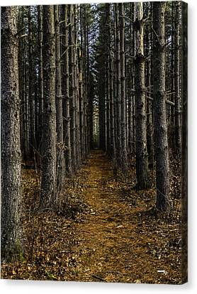 Pine Row Canvas Print