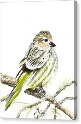 Pine Siskin Finch Canvas Print by Elisa Gabrielli