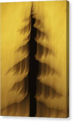 Pine Tree Abstract 2 Canvas Print by Sherri Meyer