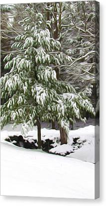 Twiggy Canvas Print - Pine Tree Covered With Snow 2 by Lanjee Chee