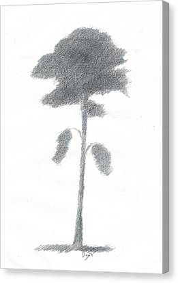 Pine Tree Drawing Number Five Canvas Print by Alan Daysh