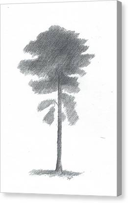 Pine Tree Drawing Number Four Canvas Print by Alan Daysh