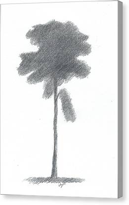 Pine Tree Drawing Number Three Canvas Print by Alan Daysh