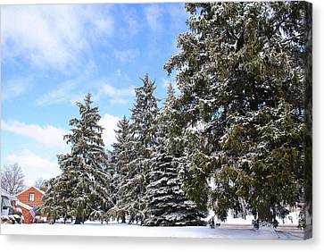 Pine Tree Haven Canvas Print by Frozen in Time Fine Art Photography