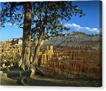 Pine Tree On Ridge Overlooking Bryce Canyon Canvas Print by Randall Nyhof