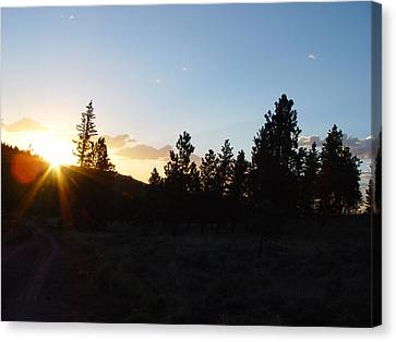 Pine Tree Sunset Canvas Print by Mark Russell