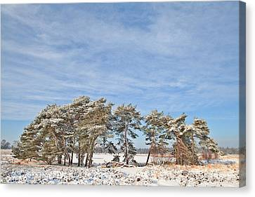 Pine Trees At Edge Of Frozen Lake Canvas Print by Dirk Ercken