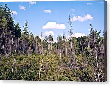 Canvas Print featuring the photograph Pine Trees Forest by Marek Poplawski