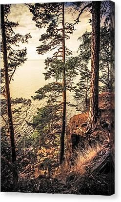 Pine Trees Of Holy Island Canvas Print by Jenny Rainbow