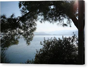 Canvas Print featuring the photograph Pine Trees Overhanging The Aegean Sea by Tracey Harrington-Simpson