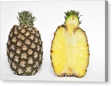 Pineapple Ananas Comosus Canvas Print by Matthias Hauser