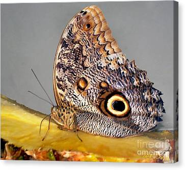 Pineapple Butterfly Canvas Print by Leslie Cruz