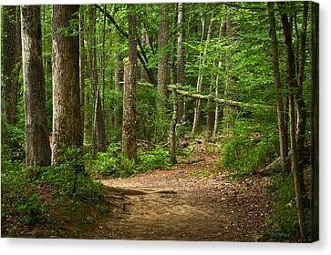 Pinewood Path Canvas Print