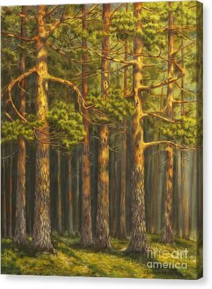 Harmonious Canvas Print - Pinewood by Veikko Suikkanen