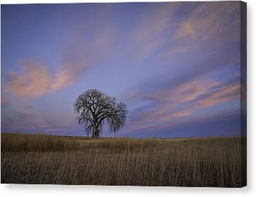Pink And Blue Canvas Print by Trish Kusal