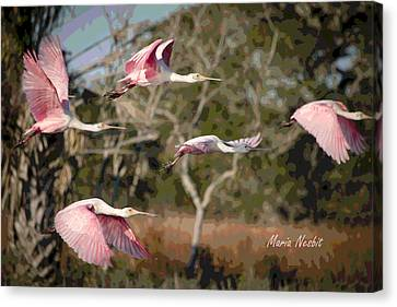 Pink And Feathers Canvas Print