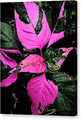 Canvas Print featuring the photograph Pink And Green by Aimee L Maher Photography and Art Visit ALMGallerydotcom