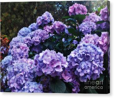 Pink And Mauve Hydrangeas Canvas Print by Kaye Menner