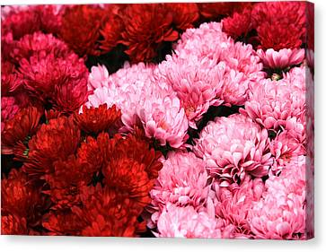 Pink And Red Canvas Print by Menachem Ganon
