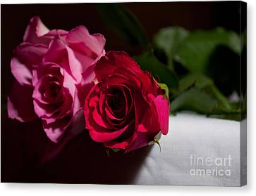 Canvas Print featuring the photograph Pink And Red Rose by Matt Malloy