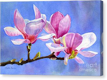 Pink And White Magnolias With Background Canvas Print by Sharon Freeman