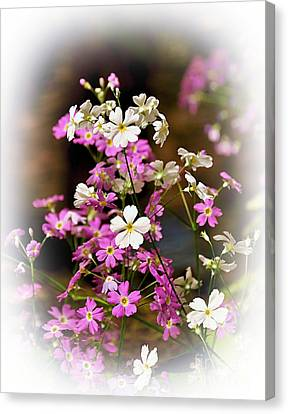 Pink Primroses Canvas Print - Pink And White Primrose by Kaye Menner