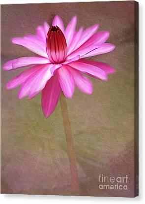 Pink Arabesque Canvas Print