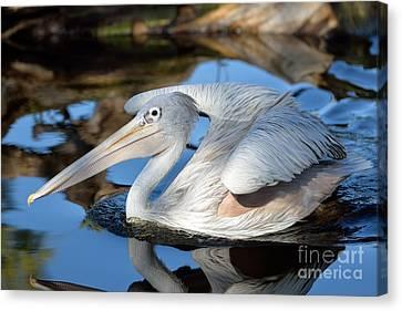 Fauna Canvas Print - Pink Backed Pelican by George Atsametakis