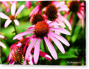 Pink Beauty Canvas Print by Marty Gayler