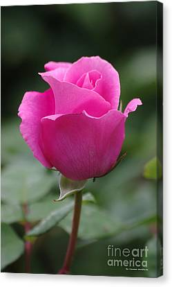 Canvas Print - Pink Beauty by Tannis  Baldwin