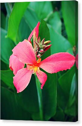 Pink Bloom Canvas Print by Cathie Tyler