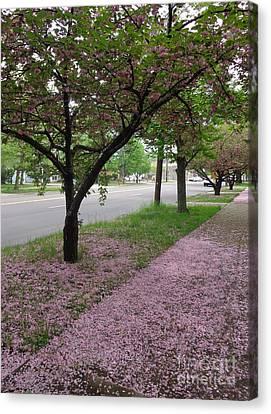 Pink Bloom  Canvas Print by Christina Verdgeline