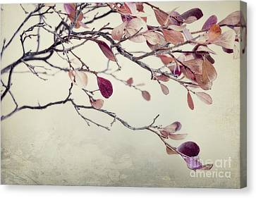 Bough Canvas Print - Pink Blueberry Leaves by Priska Wettstein