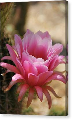 Canvas Print featuring the photograph Pink Cactus by Tammy Espino