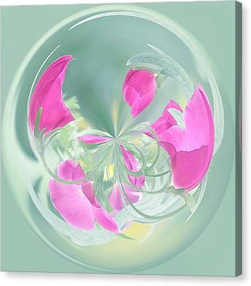 Pink California Poppy Orb Canvas Print by Kim Hojnacki