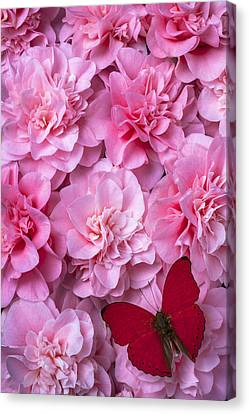 Pink Camilla's And Red Butterfly Canvas Print by Garry Gay