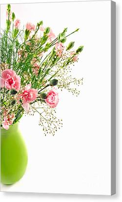 Pink Carnation Flowers Canvas Print