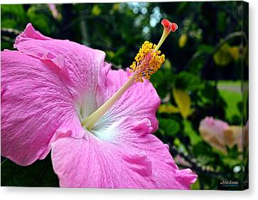 Canvas Print featuring the photograph Pink Chinese Hibiscus Flower by Aloha Art