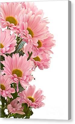 Pink Chrysanthemum Flower Canvas Print by Boon Mee