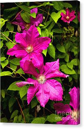 Pink Clematis Canvas Print by Lena Auxier
