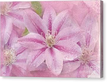 Pink Clematis Profusion Canvas Print by Betty LaRue