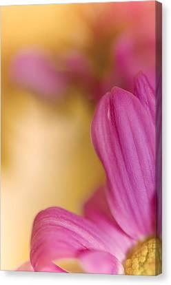 Pink Close Up Canvas Print