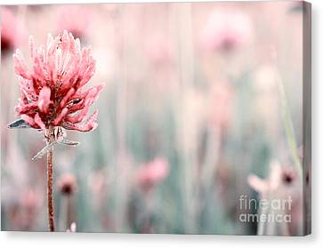 Pink Clover Flower Canvas Print by Sabine Jacobs