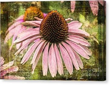 Canvas Print featuring the photograph Pink Coneflower by Vicki DeVico