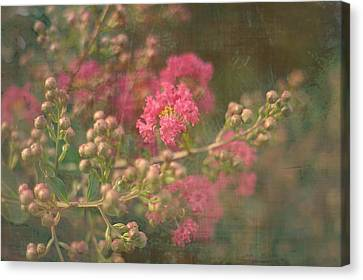 Pink Crepe Myrtle Canvas Print by Suzanne Powers