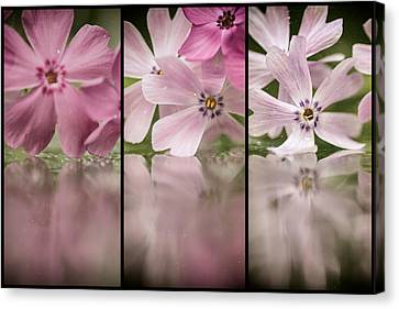 Pink Cubed Canvas Print