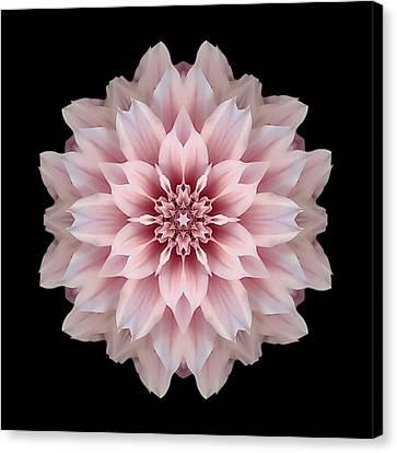 Pink Dahlia Flower Mandala Canvas Print by David J Bookbinder