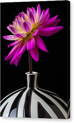 Pink Dahlia In Striped Vase Canvas Print by Garry Gay