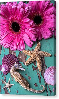 Pink Daises And Seahorse Canvas Print